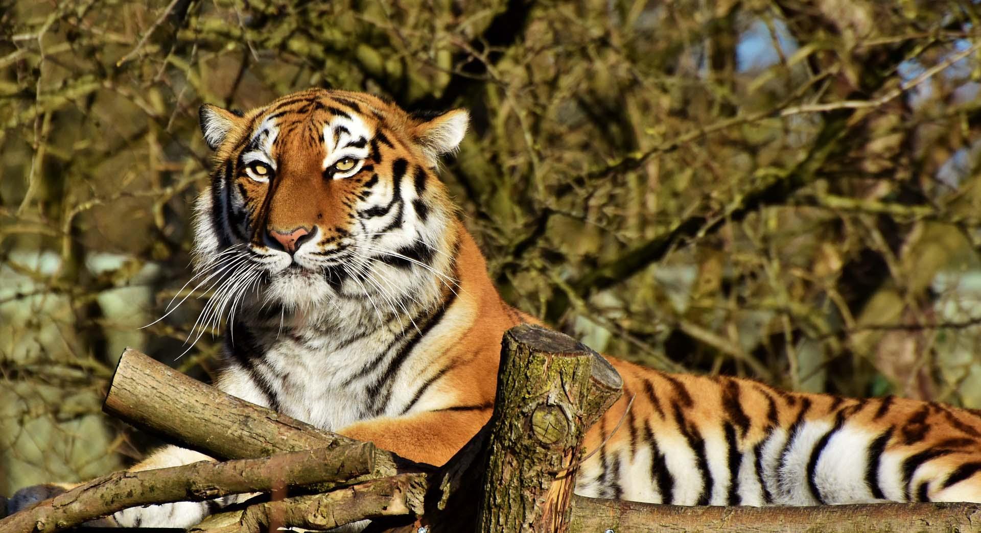 Tiger Werbeagentur IdFactory Datenschutz