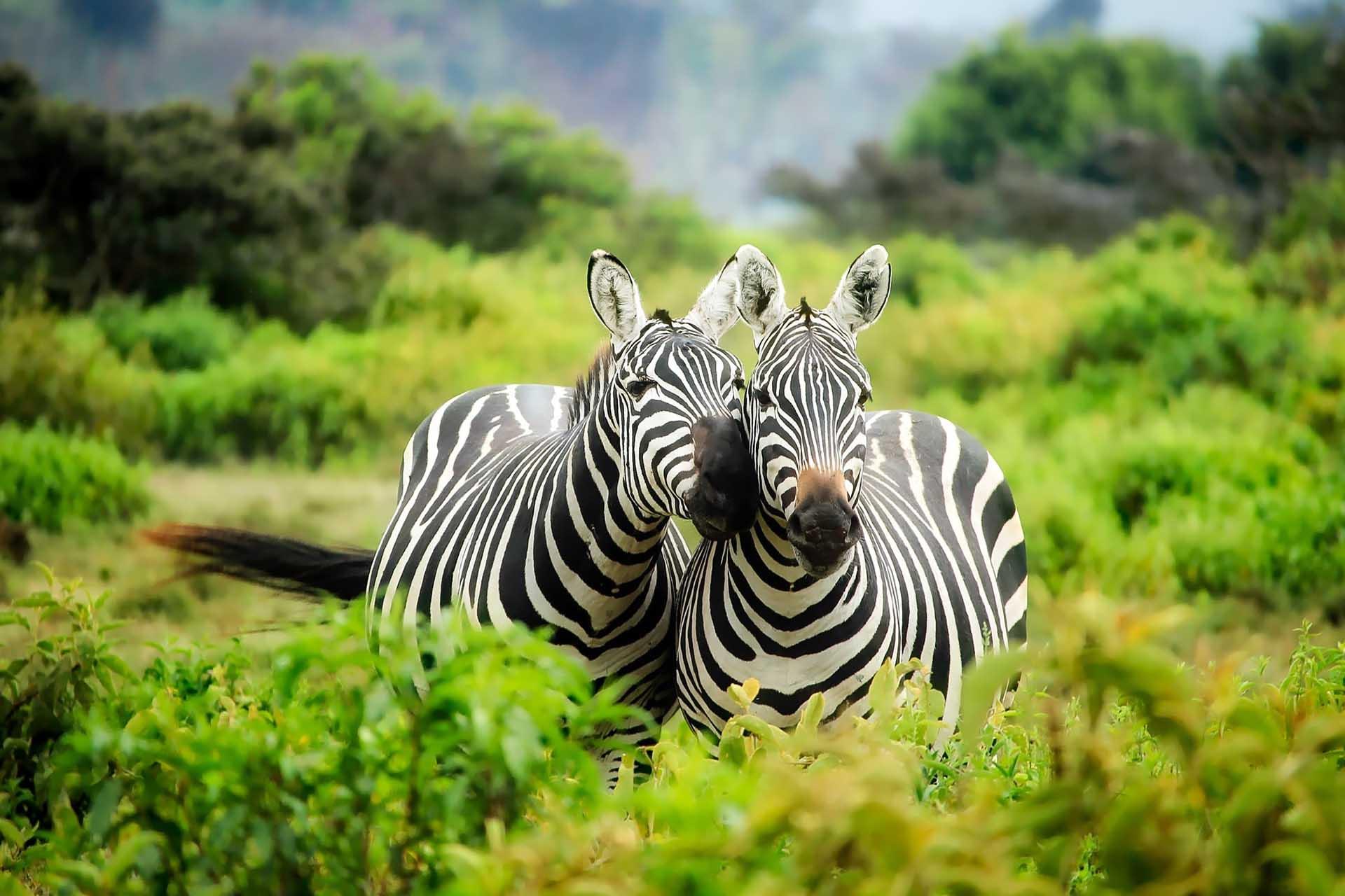 Zebra Werbeagentur IdFactory Referenzen