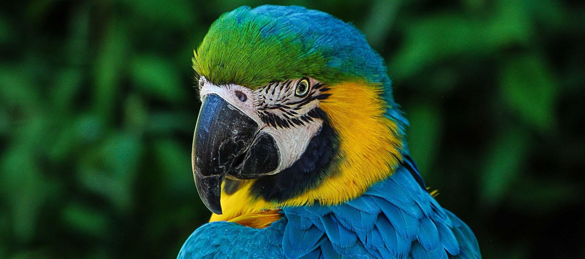 Papagei Werbeagentur IdFactory Kontakt